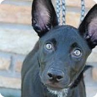 Adopt A Pet :: Paw - Justin, TX