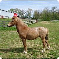 Adopt A Pet :: Tinkerbelle - Marengo, OH