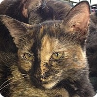 Adopt A Pet :: Rue - Chandler, AZ