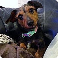 Adopt A Pet :: Lizzie - Baton Rouge, LA
