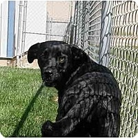 Adopt A Pet :: Sami - Meridian, ID