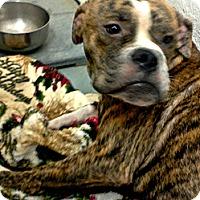 Adopt A Pet :: Nacho - Silsbee, TX