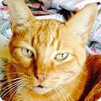 Adopt A Pet :: Daniel - Laguna Woods, CA