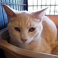 Adopt A Pet :: sunny - Centreville, VA