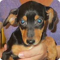 Adopt A Pet :: Santiago - Westport, CT