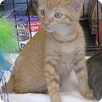 Adopt A Pet :: Rusty - Berkeley Hts, NJ