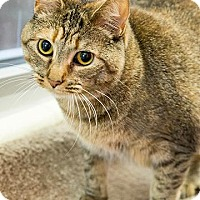 Adopt A Pet :: Winter - Chesapeake, VA