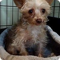 Adopt A Pet :: Leela - Lawrenceville, GA