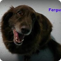 Adopt A Pet :: Fergus - Muskegon, MI