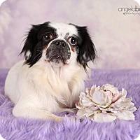 Adopt A Pet :: Loretta Lynn - Inver Grove, MN