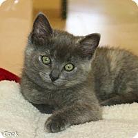 Adopt A Pet :: Baby Sil - Ann Arbor, MI