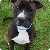 Adopt A Pet :: Wendy - Lisbon, OH