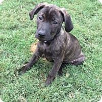 Adopt A Pet :: Miss Tigger - Rochester, NH