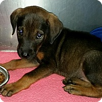Adopt A Pet :: Jasper - Irmo, SC