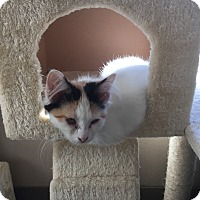 Adopt A Pet :: Faith - Richland Hills, TX