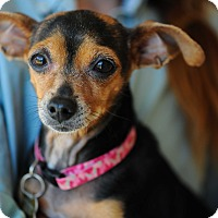 Adopt A Pet :: Tina - Culver City, CA
