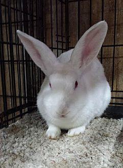 Florida White Mix for adoption in Williston, Florida - Cypress