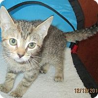 Adopt A Pet :: Willow - New Smyrna Beach, FL