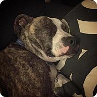 Adopt A Pet :: Razzle - Irvine, CA