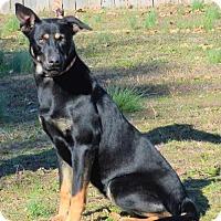 Adopt A Pet :: **ULILLY** - Mukwonago, WI
