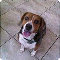 Adopt A Pet :: Karlie Kay - Phoenix, AZ