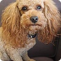 Adopt A Pet :: Rosco - Wytheville, VA