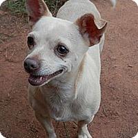 Adopt A Pet :: Cashmere - hartford, CT