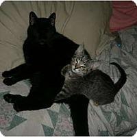 Adopt A Pet :: Neo - Brea, CA