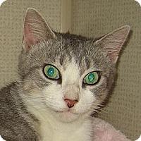 Adopt A Pet :: CHESHIRE-2012 - Hamilton, NJ