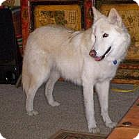 Adopt A Pet :: Sadie - Ashland, OR