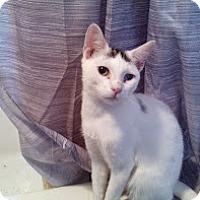 Adopt A Pet :: Marco - Brooklyn, NY