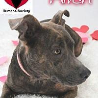 Adopt A Pet :: Milan - Crandall, GA