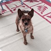Adopt A Pet :: Toby - Beavercreek, OH