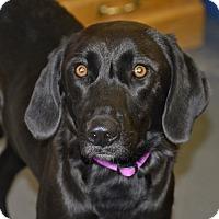 Adopt A Pet :: Indie - Meridian, ID