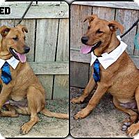 Adopt A Pet :: Ted - Kimberton, PA