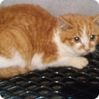 Adopt A Pet :: Butterscotch - Mount Sterling, KY