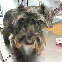 Adopt A Pet :: Bentley - Laurel, MD