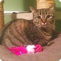 Adopt A Pet :: R Litter - Venus - Williamston, MI