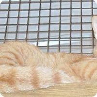 Adopt A Pet :: Orlando - Jackson, MO