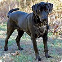 Adopt A Pet :: MAJOR - richmond, VA