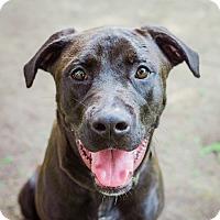 Adopt A Pet :: Bronx - Houston, TX
