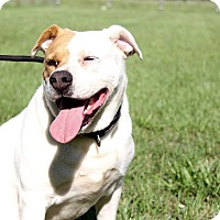 Adopt A Pet :: Stella - Williston, FL