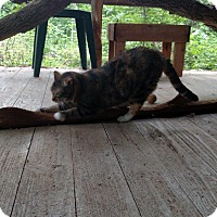 Adopt A Pet :: HANNAH - NAVASOTA, TX