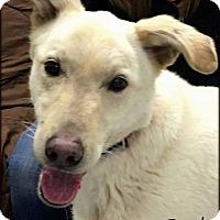 Adopt A Pet :: Brody - Ottumwa, IA