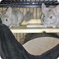 Adopt A Pet :: Grace & Kelli - Avondale, LA
