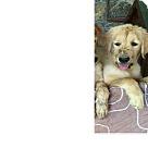 Adopt A Pet :: Alyssa