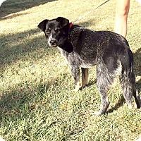 Adopt A Pet :: Sansa - Allen, TX