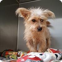 Adopt A Pet :: Benji - Brownsville, TX