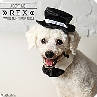 Adopt A Pet :: Rex-Pending Adoption - Omaha, NE