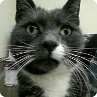 Adopt A Pet :: Tobe - Trevose, PA